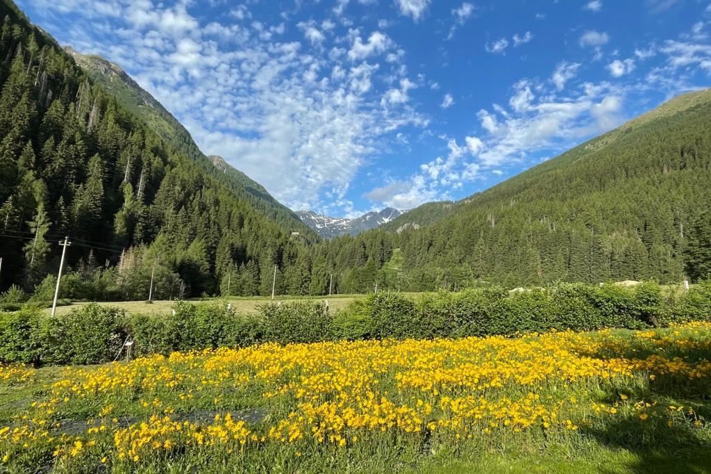 giardino-dei-sensi-creme-naturali-olga-casanova-val-di-sole