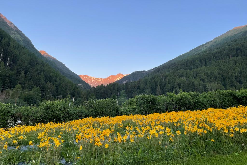 olga-casanova-creme-stella-alpina-val-di-sole-trentino