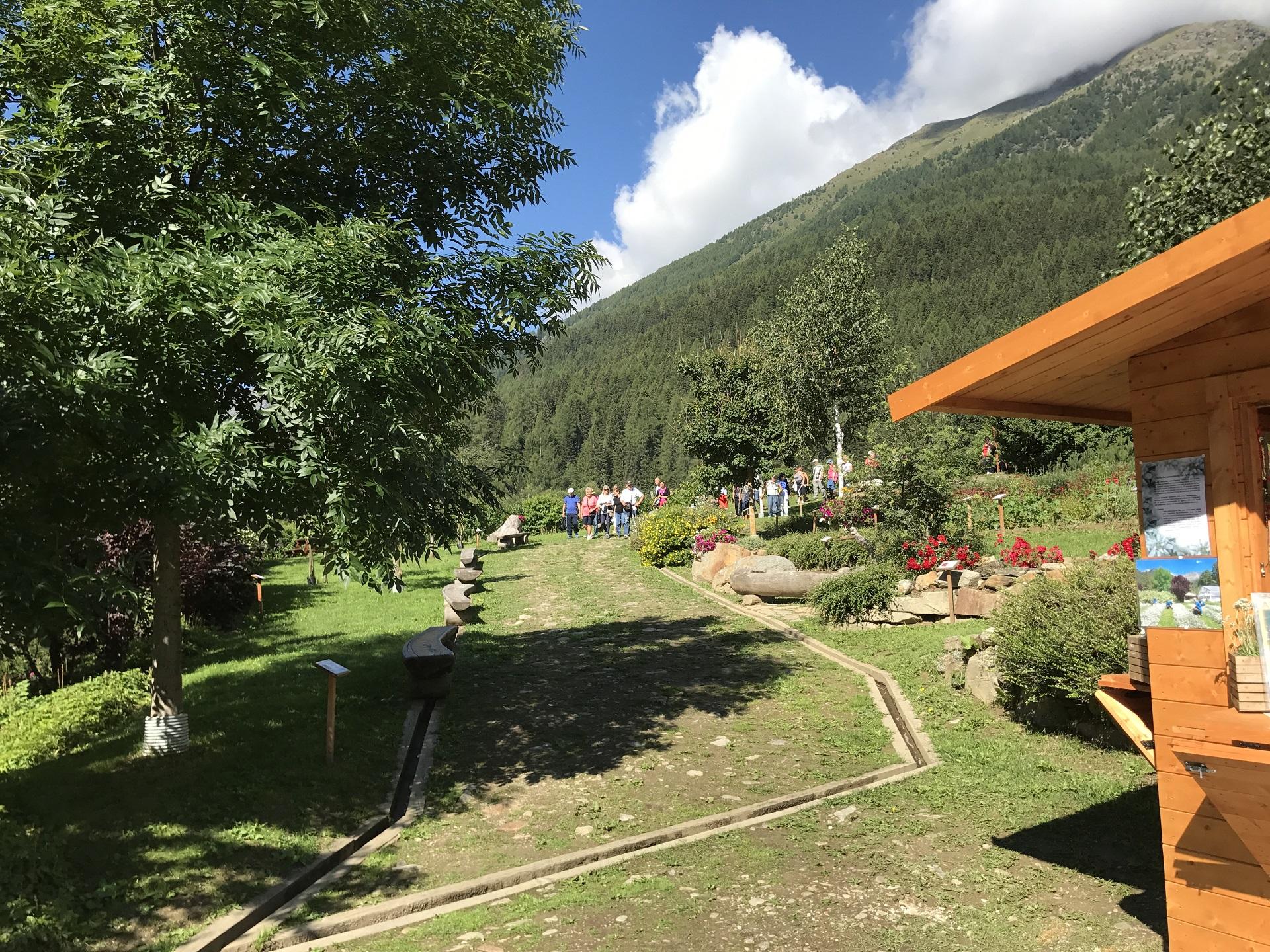 Calendula Piante Officinali coltivazione Peio Valdisole Trentino - Olga Casanova